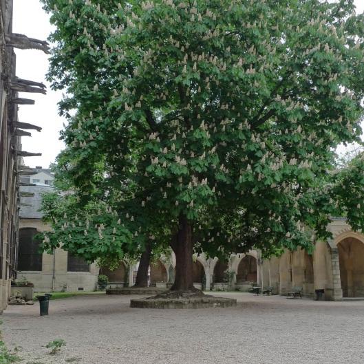 Claustro de Saint Séverin