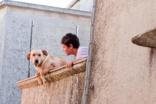 Chico y perro
